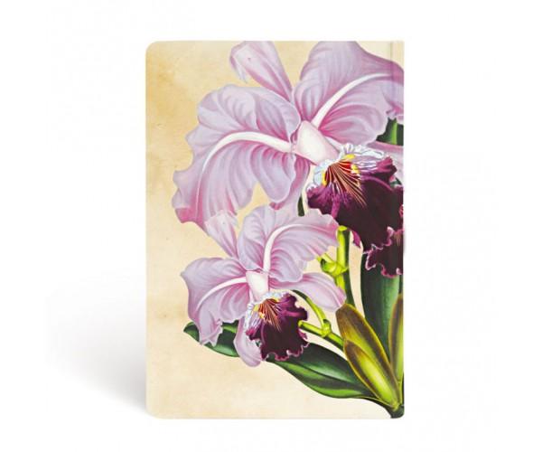 Бразильская орхидея